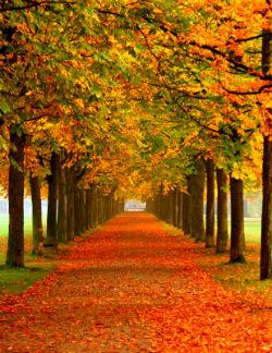 autumn_leaves_w250.jpg